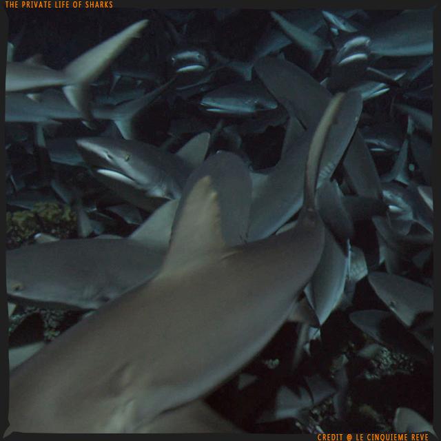 portfolio-shark