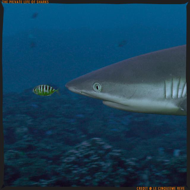 portfolio-shark05