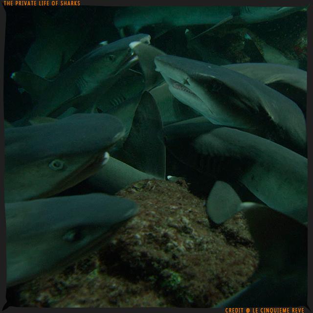 portfolio-shark06