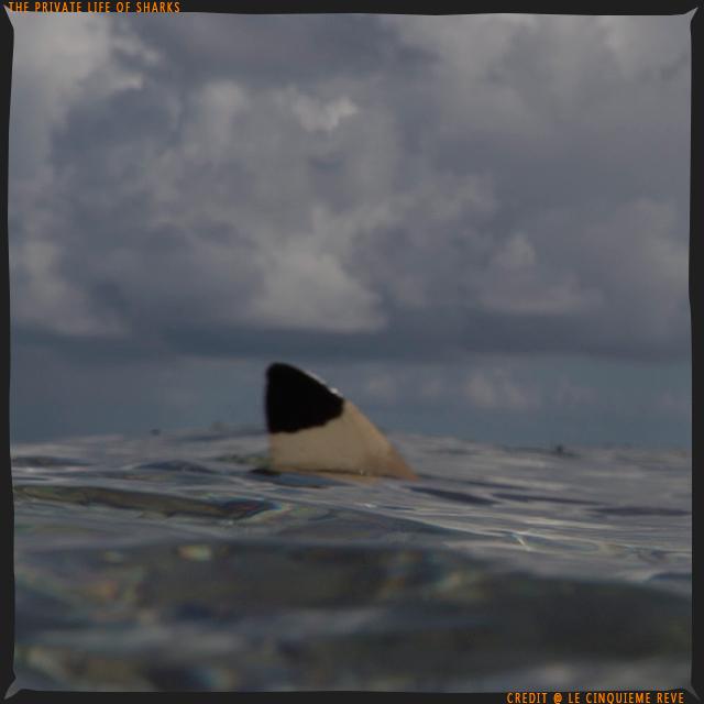 portfolio-shark08