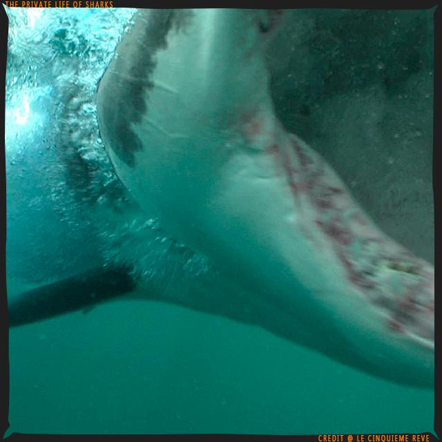 portfolio-shark10