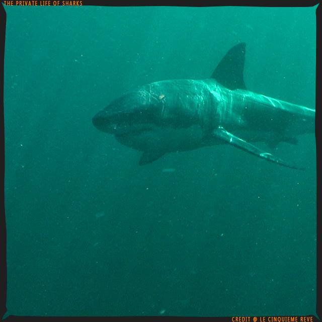 portfolio-shark11