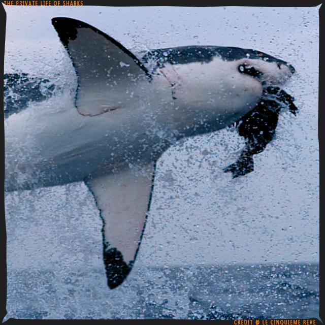 portfolio-shark12