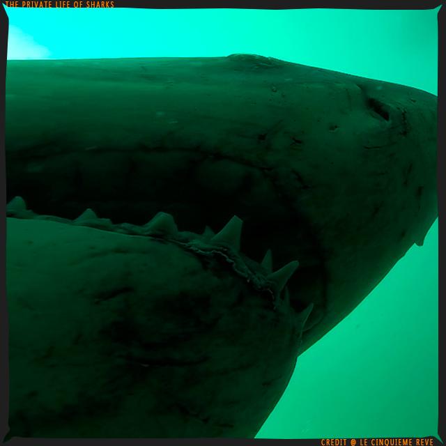 portfolio-shark13