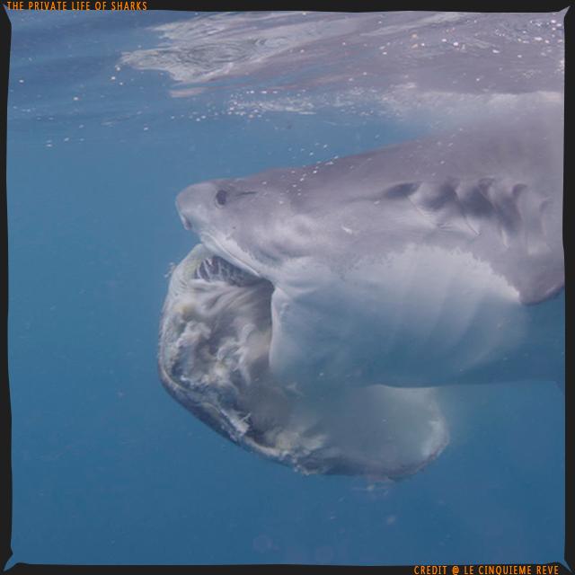 portfolio-shark16
