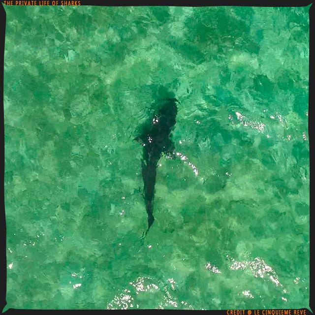 portfolio-shark18