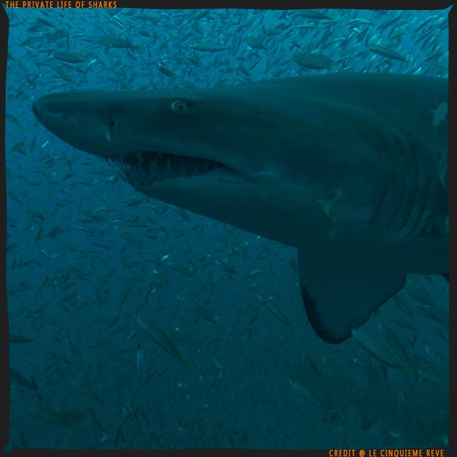 portfolio-shark22