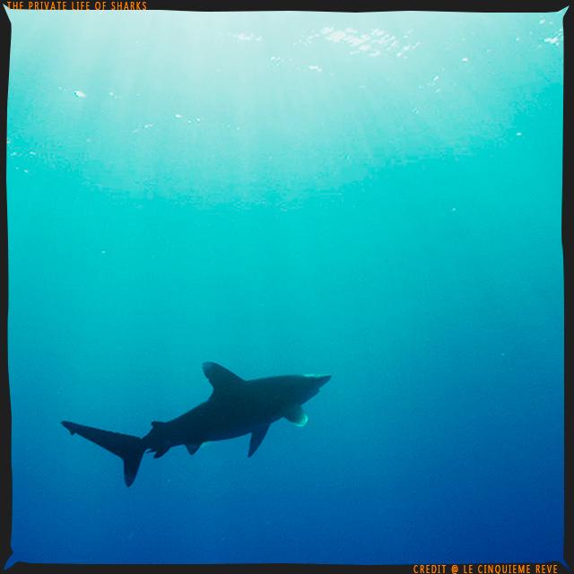 portfolio-shark25